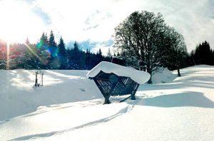 Winterlandschaft mit Wald, Futterkrippe im Vordergrund